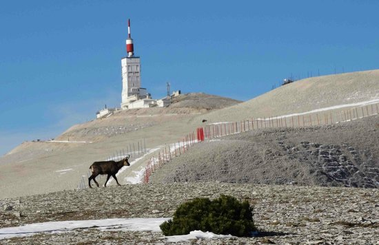ventoux-passion-nature